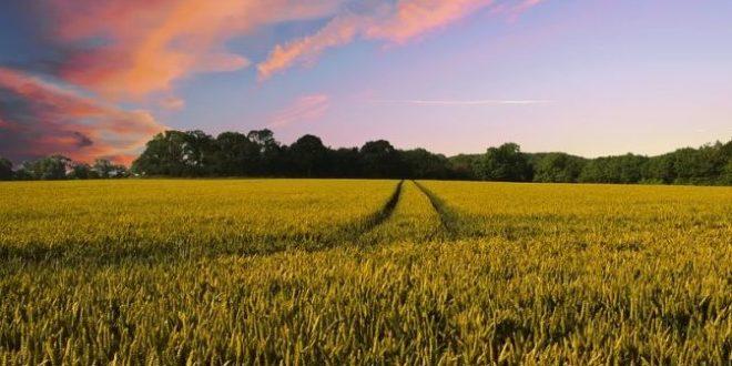 BREXIT: COLDIRETTI PUGLSIA AGRICOLTURA A PAGARE IL CONTO; EXPORT REGIONALE +41,5% IN 5 ANNI
